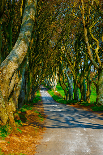 an image showing the trees from the popular tv series the game of thrones which is known as the dark hedges